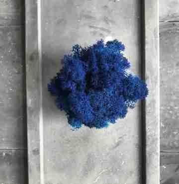 Мох Ягель Blue