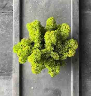 Мох Ягель Lime green