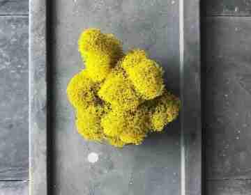 Мох Ягель Lemon