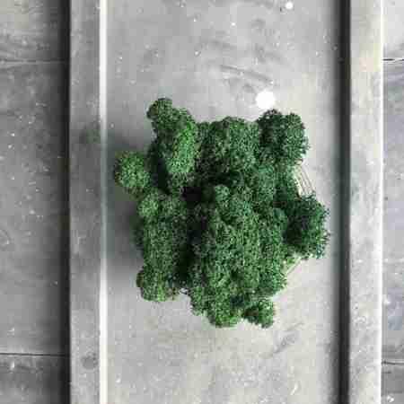 Мох Ягель Dark green
