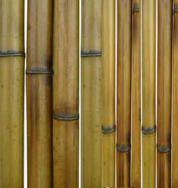 Бамбук термообработанный d 50-60 мм