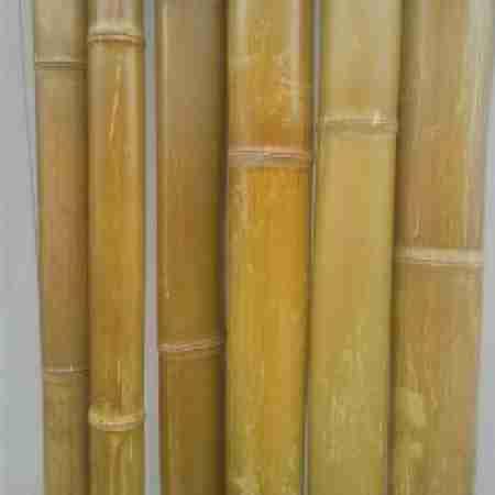 Бамбук леопардовый d 40-50 мм