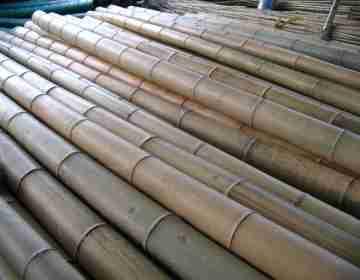 Бамбук Китай 65-74 мм