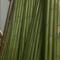 Бамбук зеленый d 40-50мм L=3м в Москве недорого - BambooCapital