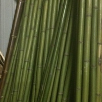 Бамбук зеленый d 40-50мм L=3м