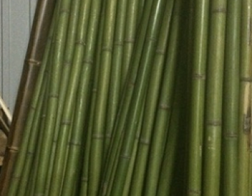 Бамбук зеленый d 20-30мм L=3м