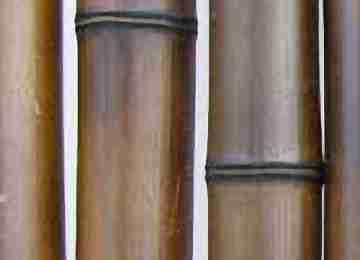 Бамбук шоколад.обжиг. d 50-60мм L=2,8-3м