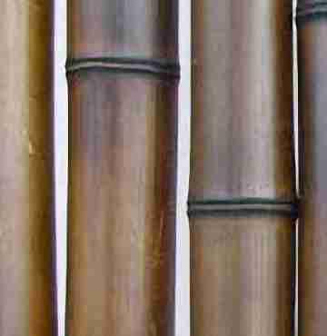 Бамбук шоколад. d 60-70мм L=2,8-3м