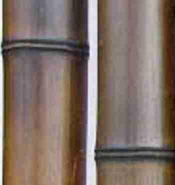 Бамбук шоколад.обжиг. d 80-90мм L=2,8-3м