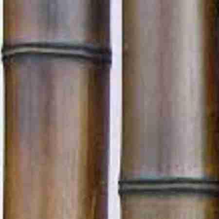 Бамбук шоколад.обжиг. d 90-100мм L=2,8-3м