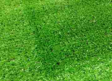 Искусственная трава Инсайт